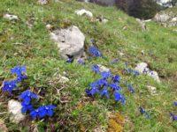Flora Chiemgau (7)